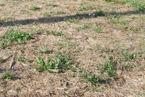 Terreno a sodo